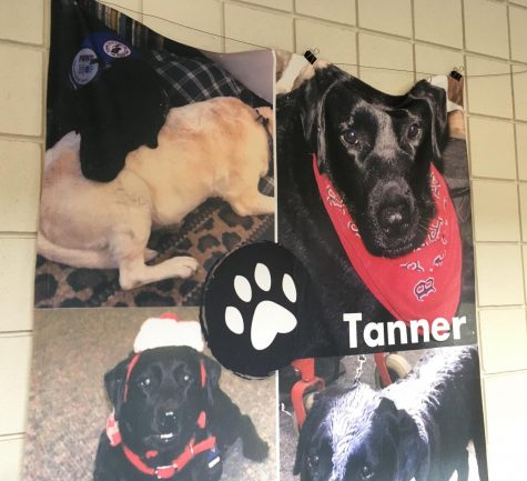 Tanner, a service dog for Chris Cotreau trained by Paws for a Cause, died last year of cancer.